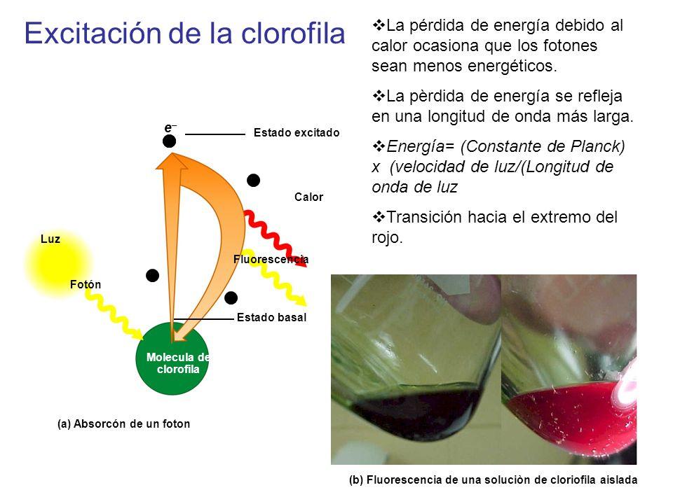 Estado excitado e Calor Luz Fotón Fluorescencia Molecula de clorofila Estado basal 2 (a) Absorcón de un foton (b) Fluorescencia de una soluciòn de clo