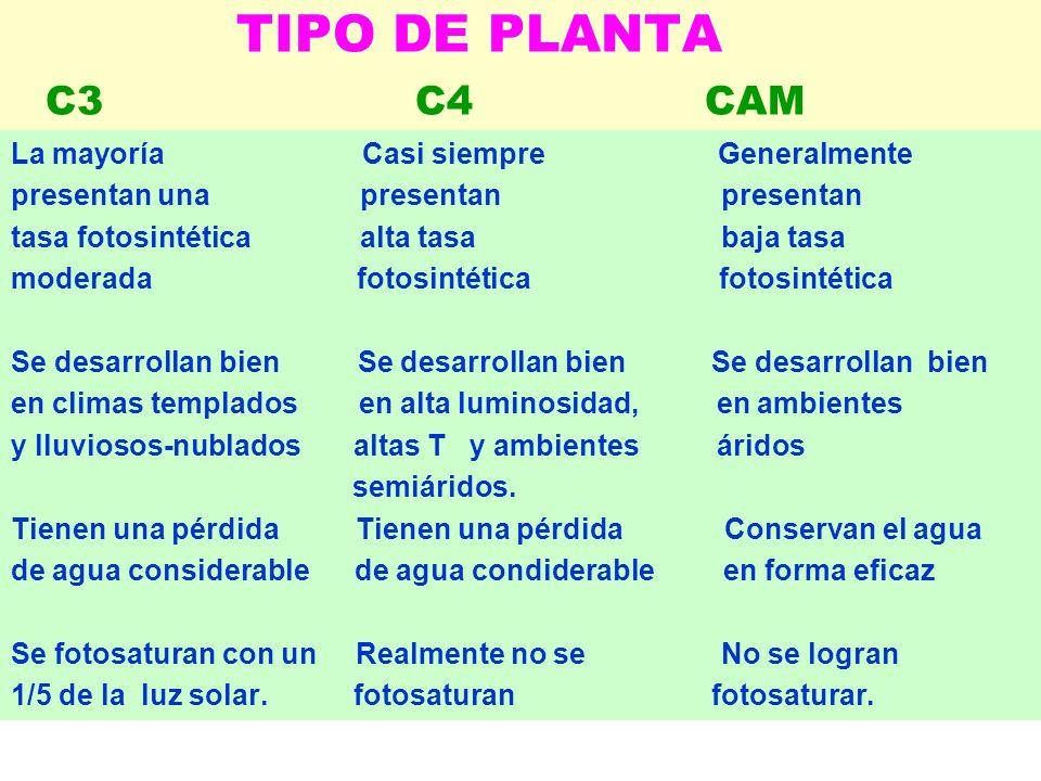 TIPO DE PLANTA C3 C4 CAM La mayoría Casi siempre Generalmente presentan una presentan presentan tasa fotosintética alta tasa baja tasa moderada fotosi