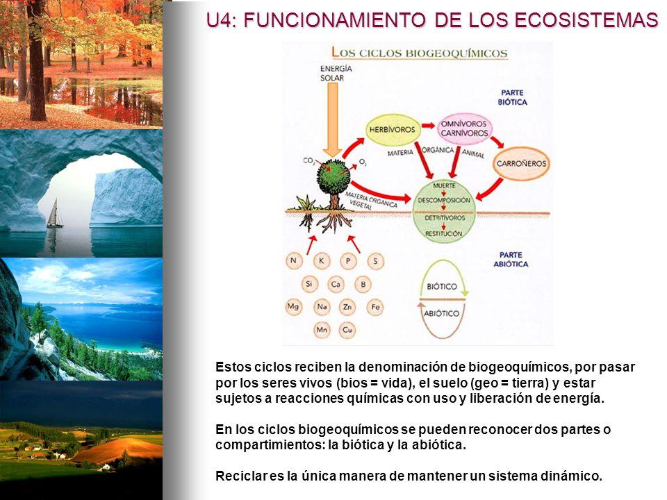 Estos ciclos reciben la denominación de biogeoquímicos, por pasar por los seres vivos (bios = vida), el suelo (geo = tierra) y estar sujetos a reaccio