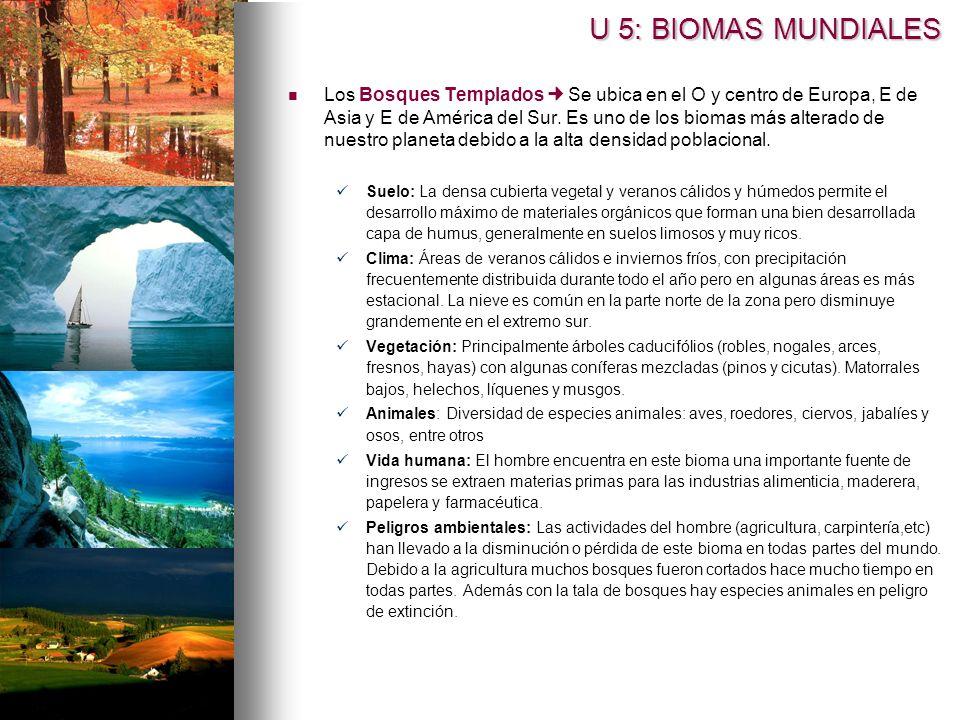 Los Bosques Templados Se ubica en el O y centro de Europa, E de Asia y E de América del Sur. Es uno de los biomas más alterado de nuestro planeta debi
