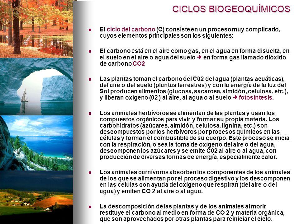 CICLOS BIOGEOQUÍMICOS El ciclo del carbono (C) consiste en un proceso muy complicado, cuyos elementos principales son los siguientes: El carbono está