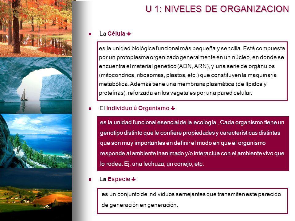 El Individuo ú Organismo es la unidad biológica funcional más pequeña y sencilla. Está compuesta por un protoplasma organizado generalmente en un núcl