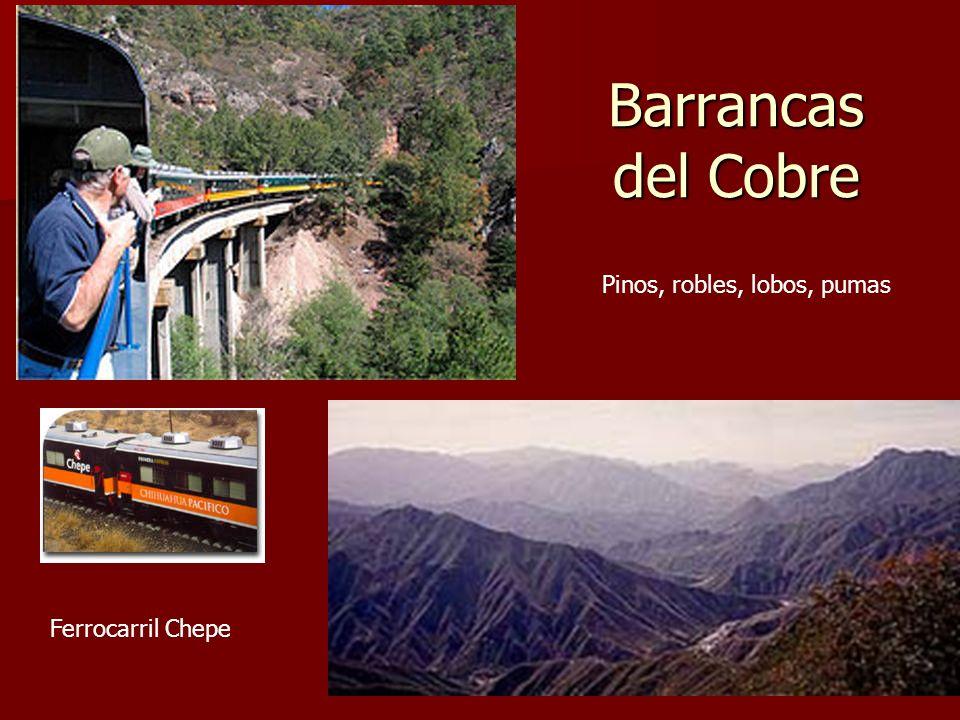 Barrancas del Cobre Ferrocarril Chepe Pinos, robles, lobos, pumas