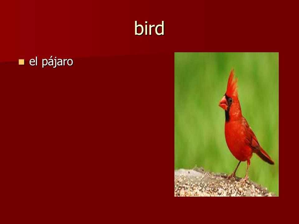 el pájaro el pájaro bird