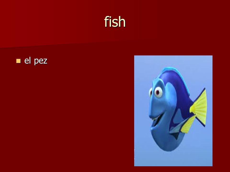 el pez el pez fish