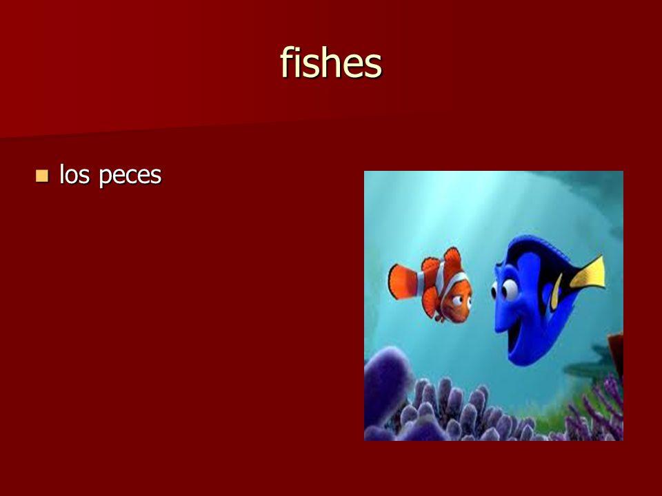 los peces los peces fishes