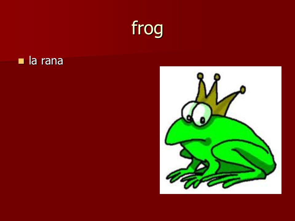 la rana la rana frog