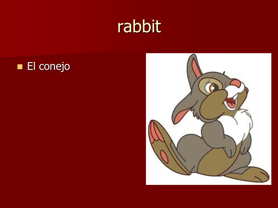 El conejo El conejo rabbit
