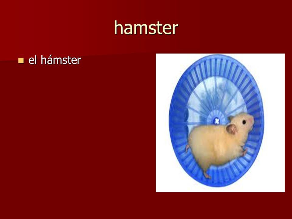 el hámster el hámster hamster