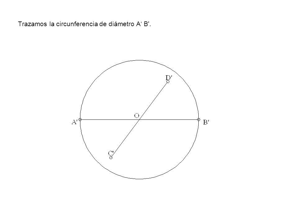 Trazamos la circunferencia de diámetro A B'.