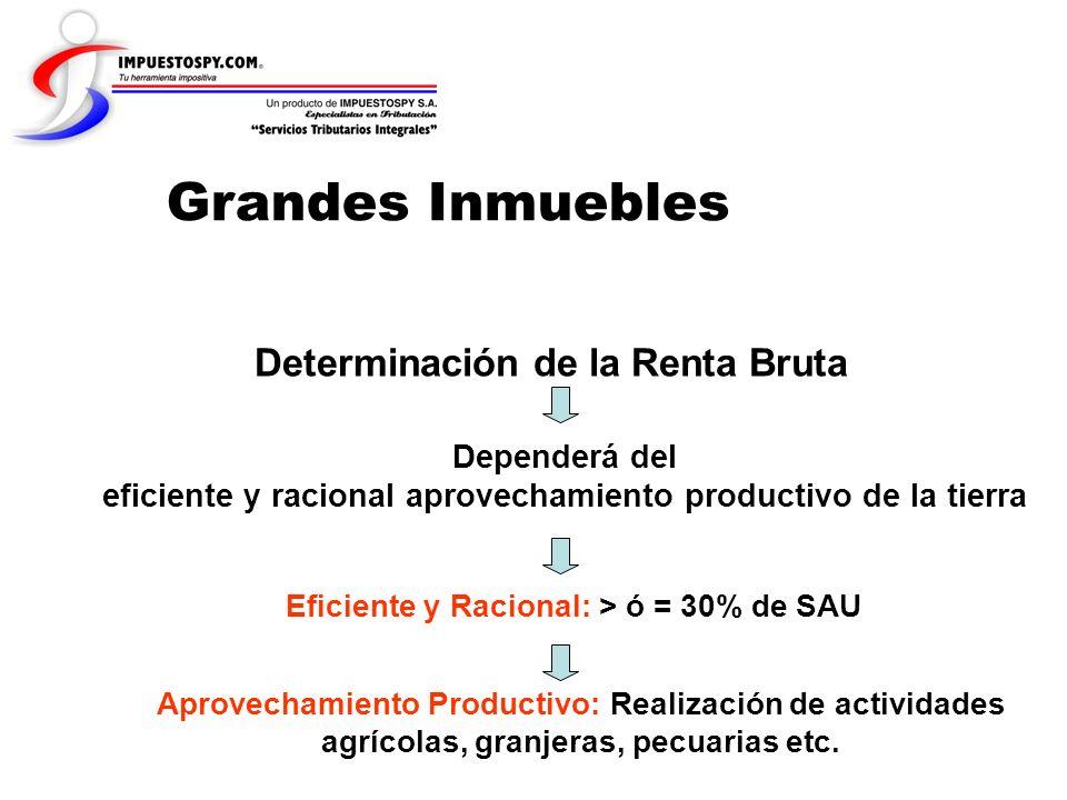 Grandes Inmuebles Determinación de la Renta Bruta Dependerá del eficiente y racional aprovechamiento productivo de la tierra Eficiente y Racional: > ó