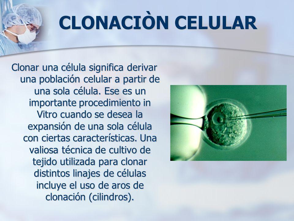 CLONACIÒN CELULAR Clonar una célula significa derivar una población celular a partir de una sola célula. Ese es un importante procedimiento in Vitro c