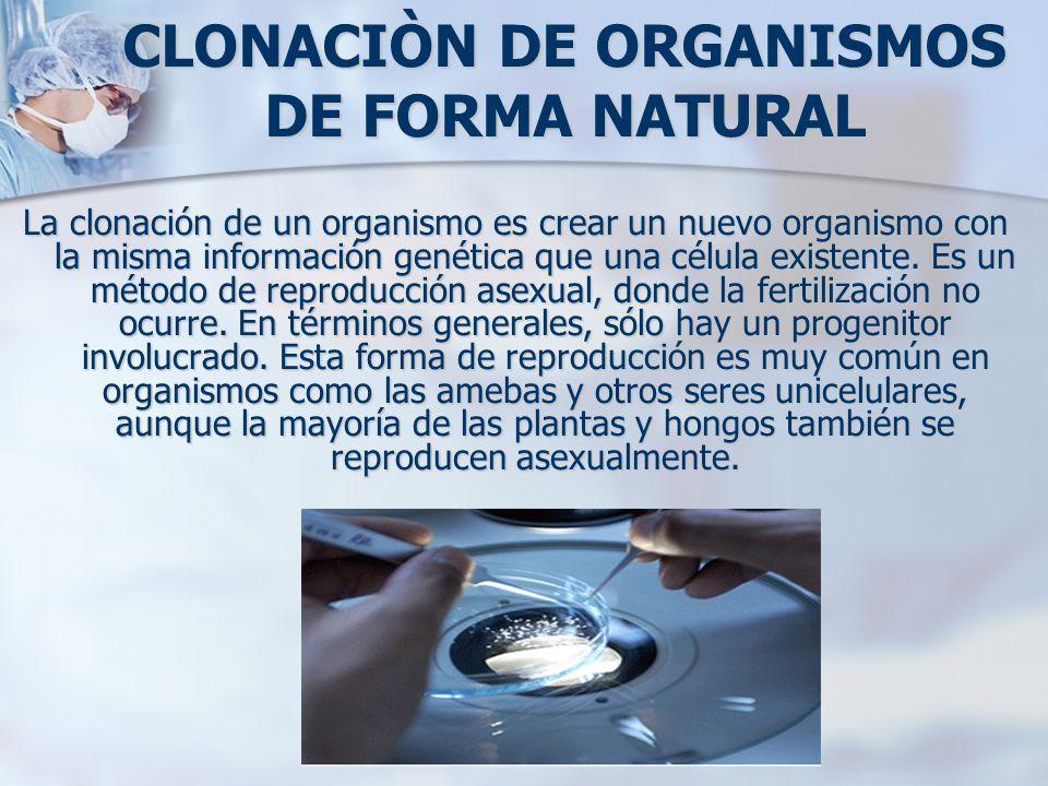 CLONACIÒN DE ORGANISMOS DE FORMA NATURAL La clonación de un organismo es crear un nuevo organismo con la misma información genética que una célula exi