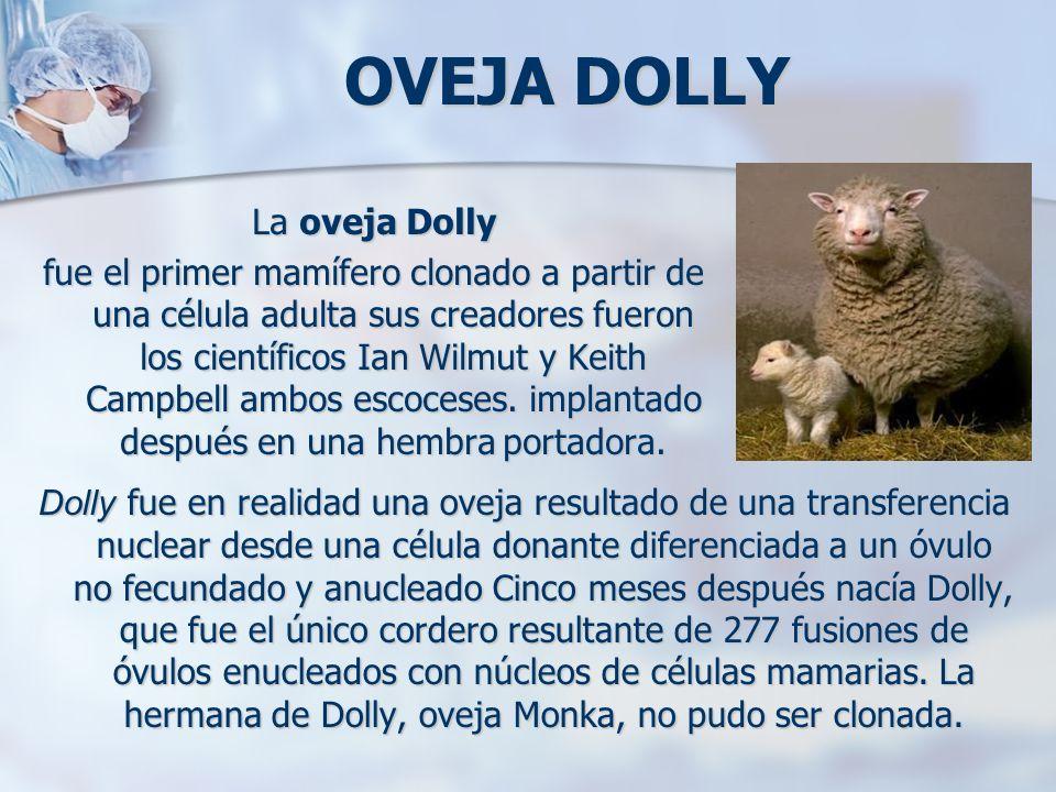 OVEJA DOLLY La oveja Dolly fue el primer mamífero clonado a partir de una célula adulta sus creadores fueron los científicos Ian Wilmut y Keith Campbe
