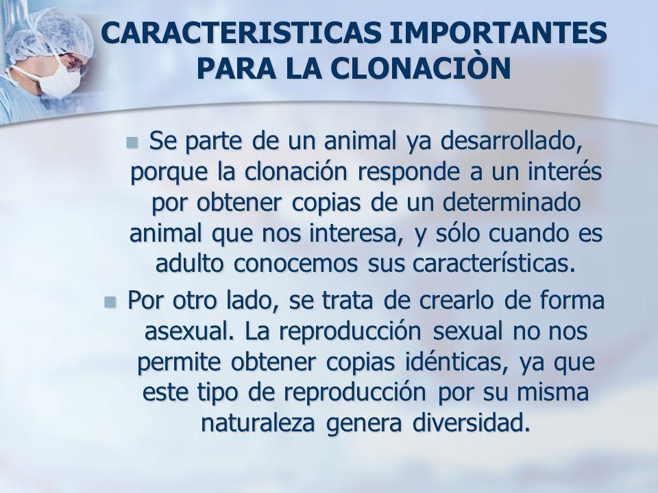 CARACTERISTICAS IMPORTANTES PARA LA CLONACIÒN Se parte de un animal ya desarrollado, porque la clonación responde a un interés por obtener copias de u