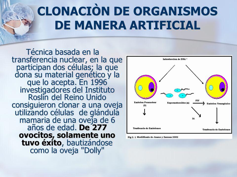 CLONACIÒN DE ORGANISMOS DE MANERA ARTIFICIAL Técnica basada en la transferencia nuclear, en la que participan dos células; la que dona su material gen