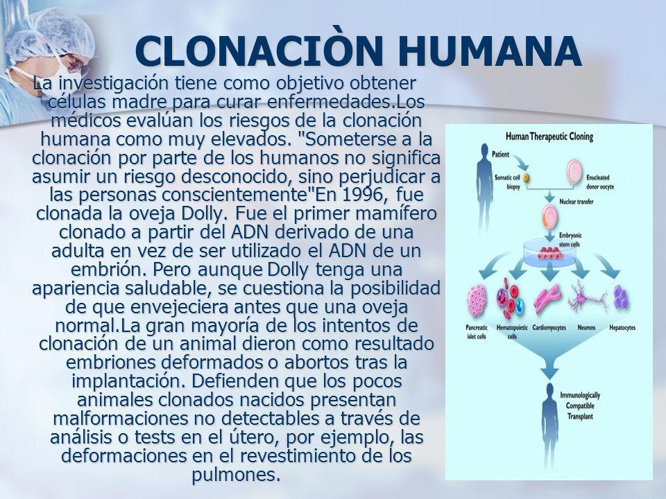 CLONACIÒN HUMANA La investigación tiene como objetivo obtener células madre para curar enfermedades.Los médicos evalúan los riesgos de la clonación hu
