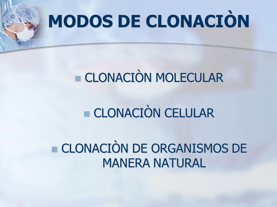MODOS DE CLONACIÒN CLONACIÒN MOLECULAR CLONACIÒN MOLECULAR CLONACIÒN CELULAR CLONACIÒN CELULAR CLONACIÒN DE ORGANISMOS DE MANERA NATURAL CLONACIÒN DE
