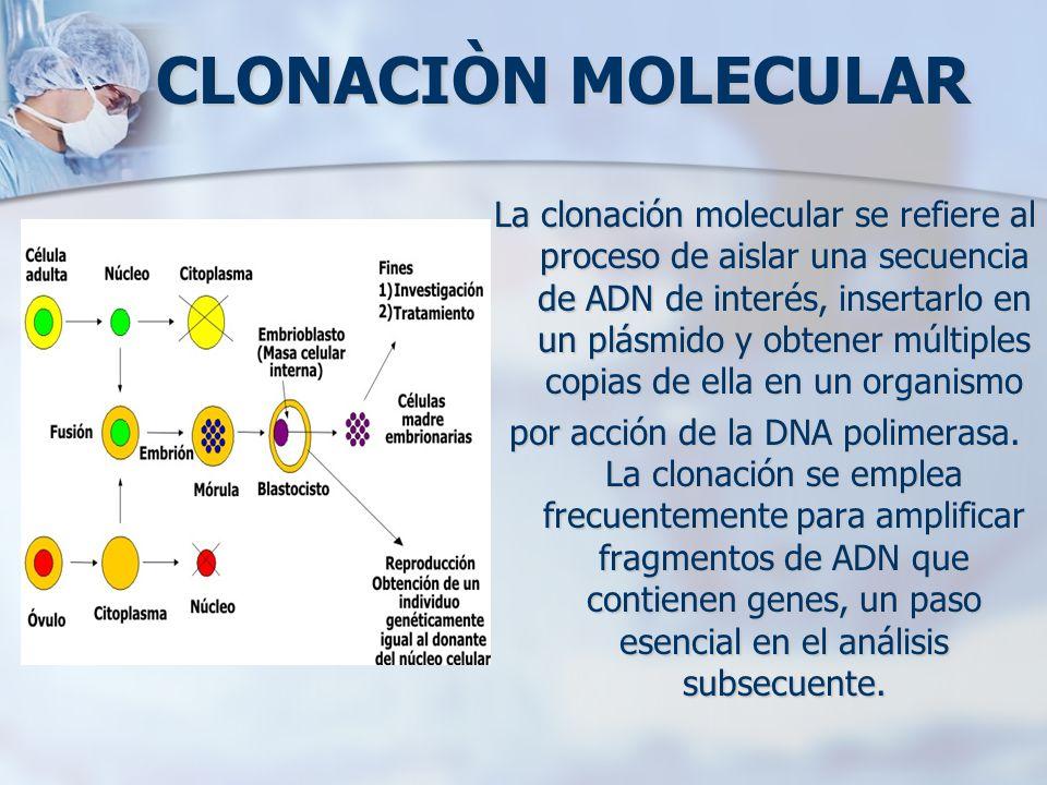 CLONACIÒN MOLECULAR La clonación molecular se refiere al proceso de aislar una secuencia de ADN de interés, insertarlo en un plásmido y obtener múltip