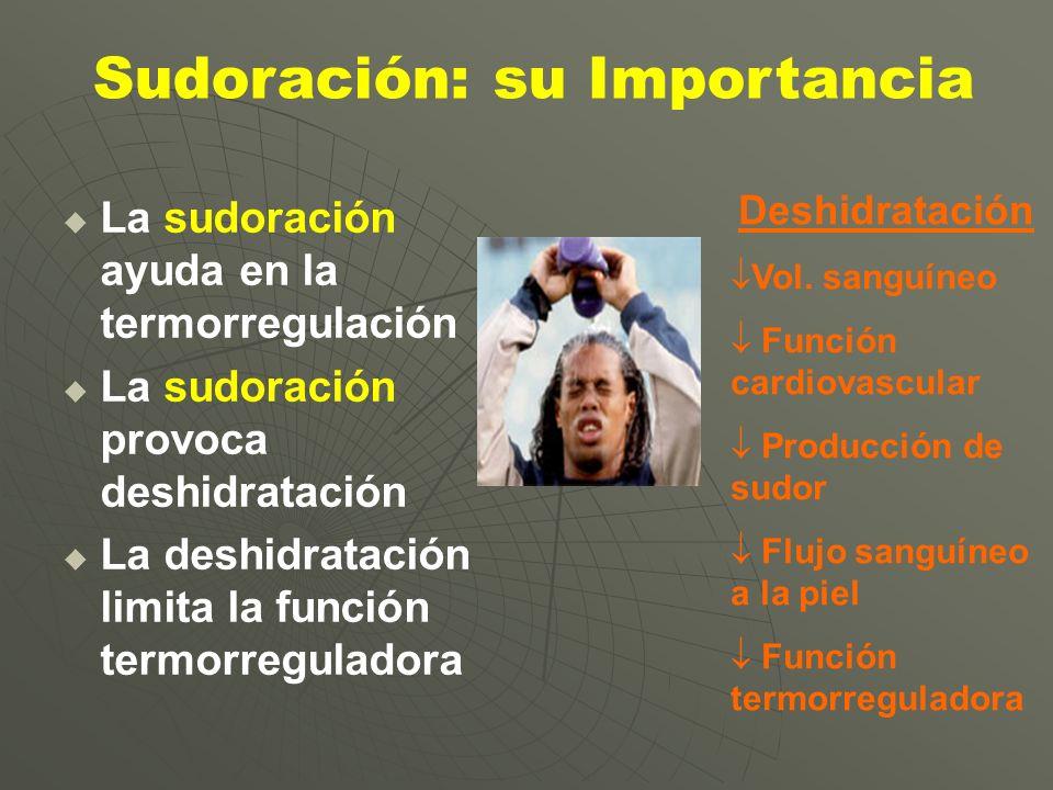 La sudoración ayuda en la termorregulación La sudoración provoca deshidratación La deshidratación limita la función termorreguladora Deshidratación Vo