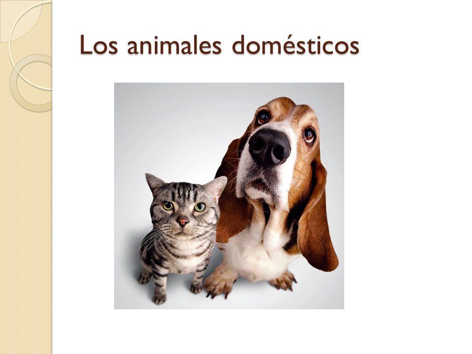 Los animales domésticos