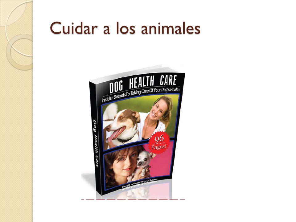 Cuidar a los animales