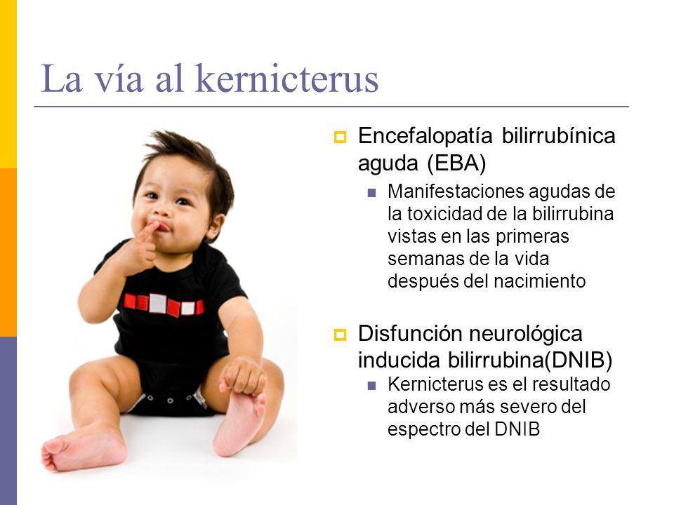 La vía al kernicterus Encefalopatía bilirrubínica aguda (EBA) Manifestaciones agudas de la toxicidad de la bilirrubina vistas en las primeras semanas