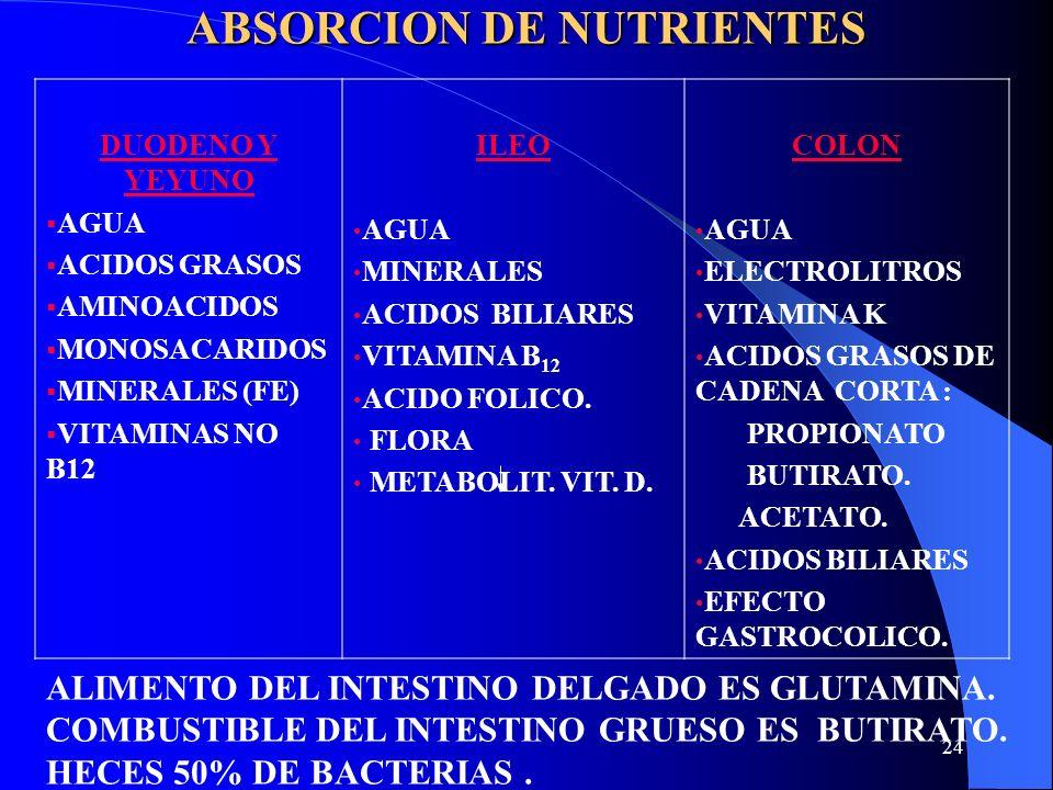 24 ABSORCION DE NUTRIENTES DUODENO Y YEYUNO AGUA ACIDOS GRASOS AMINOACIDOS MONOSACARIDOS MINERALES (FE) VITAMINAS NO B12 ILEO AGUA MINERALES ACIDOS BI