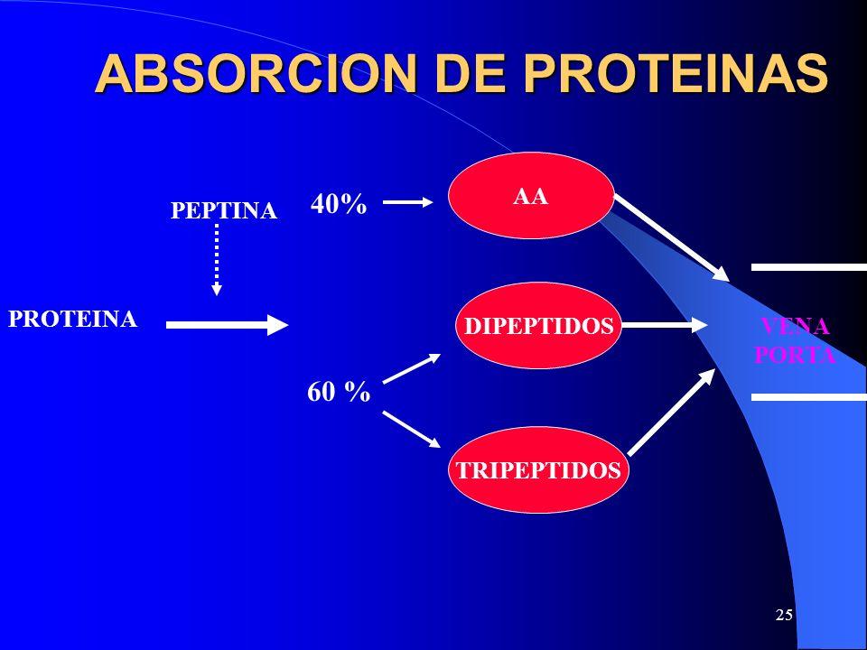 25 ABSORCION DE PROTEINAS PROTEINA PEPTINA AA DIPEPTIDOS TRIPEPTIDOS VENA PORTA 40% 60 %