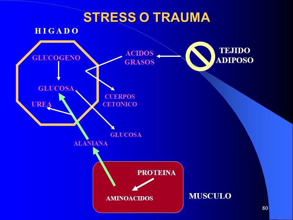 80 STRESS O TRAUMA GLUCOSA TEJIDO ADIPOSO MUSCULO CUERPOS CETONICO ACIDOS GRASOS GLUCOGENO H I G A D O AMINOACIDOS GLUCOSA UREA PROTEINA ALANIANA