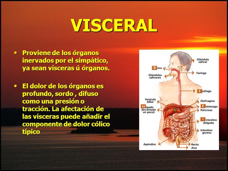 VISCERAL Proviene de los órganos inervados por el simpático, ya sean vísceras ú órganos. Proviene de los órganos inervados por el simpático, ya sean v