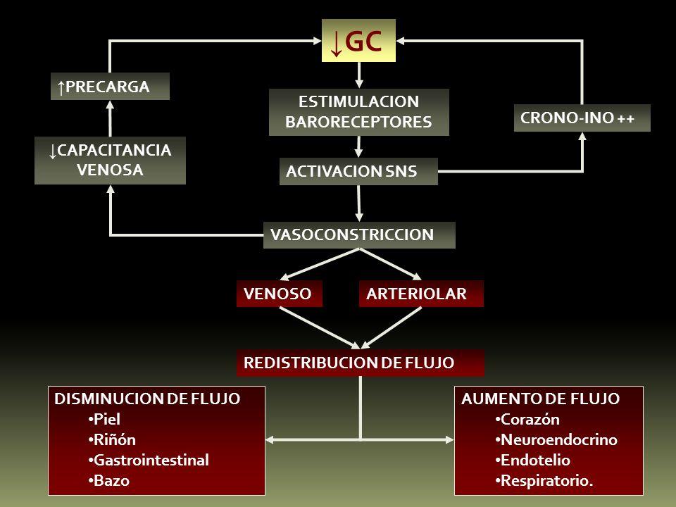 GC ESTIMULACION BARORECEPTORES ACTIVACION SNS VASOCONSTRICCION CRONO-INO ++ VENOSOARTERIOLAR REDISTRIBUCION DE FLUJO DISMINUCION DE FLUJO Piel Riñón G