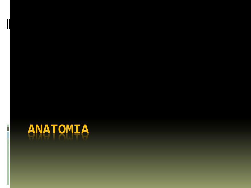 Riñón Isquemia Estados de Bajo flujo Trombosis en el glomerulo Injuria Tubular Isquemia Daño por citoquinas Radicales Libres de O2 Terapia puede la isquemia y tener efectos directos nocivos: Vasoconstrictores Antibioticos nefrotoxicos ATN Kidney International 1998 53:S15-18 NEJM 2004 351:159-69