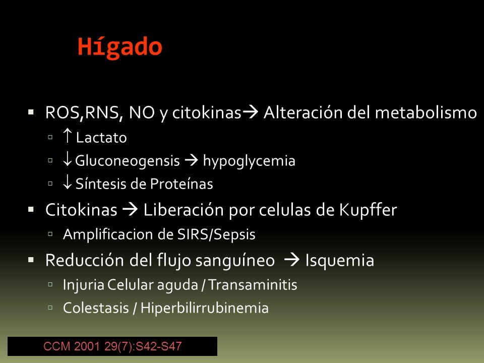 Hígado ROS,RNS, NO y citokinas Alteración del metabolismo Lactato Gluconeogensis hypoglycemia Síntesis de Proteínas Citokinas Liberación por celulas d