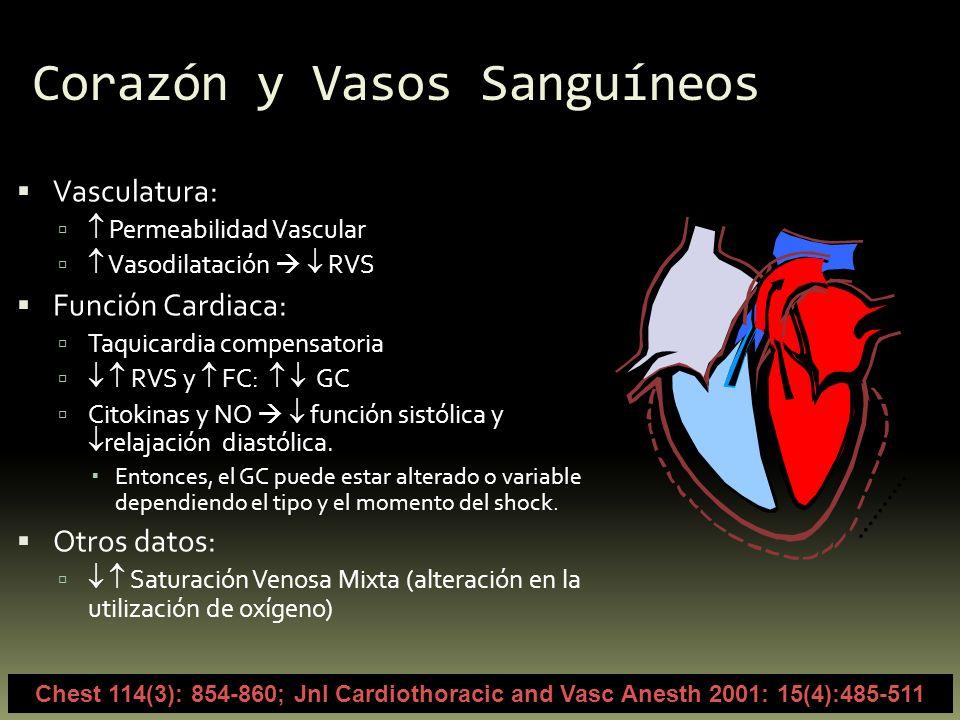 Corazón y Vasos Sanguíneos Vasculatura: Permeabilidad Vascular Vasodilatación RVS Función Cardiaca: Taquicardia compensatoria RVS y FC: GC Citokinas y