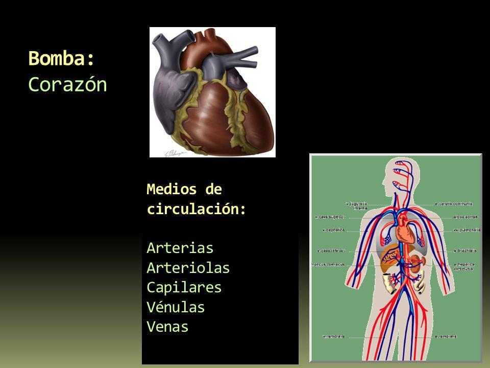 Medios de circulación: Arterias Arteriolas Capilares Vénulas Venas Bomba: Corazón