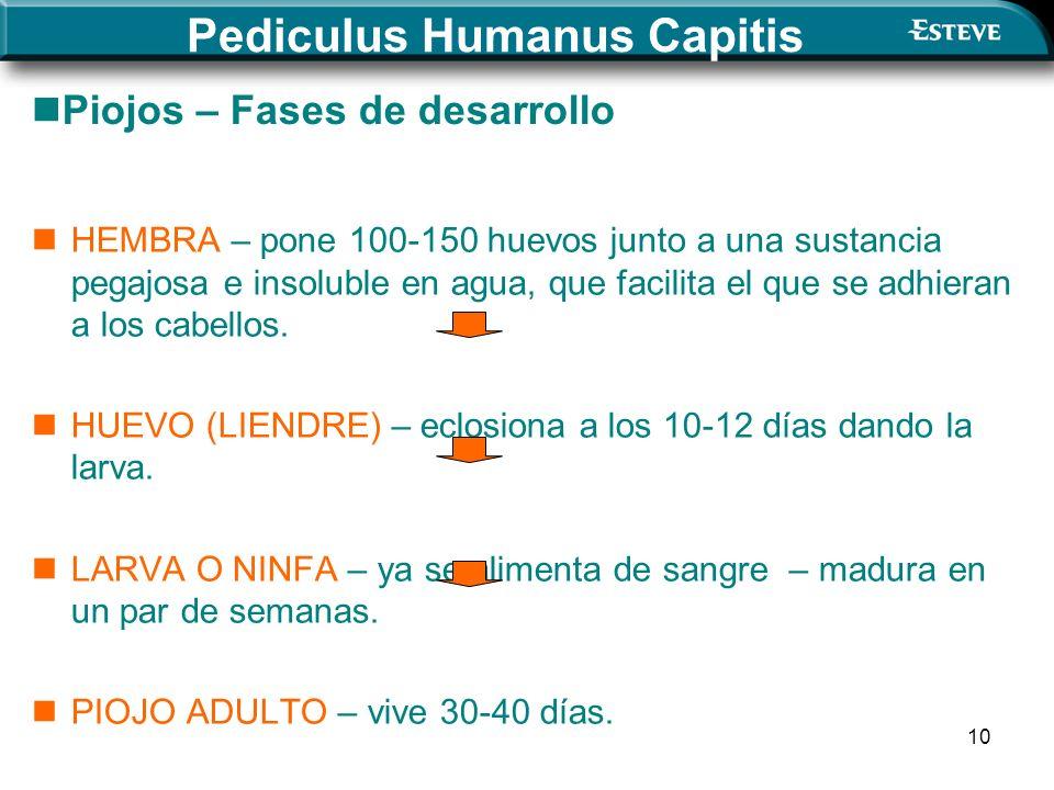 10 Pediculus Humanus Capitis HEMBRA – pone 100-150 huevos junto a una sustancia pegajosa e insoluble en agua, que facilita el que se adhieran a los cabellos.