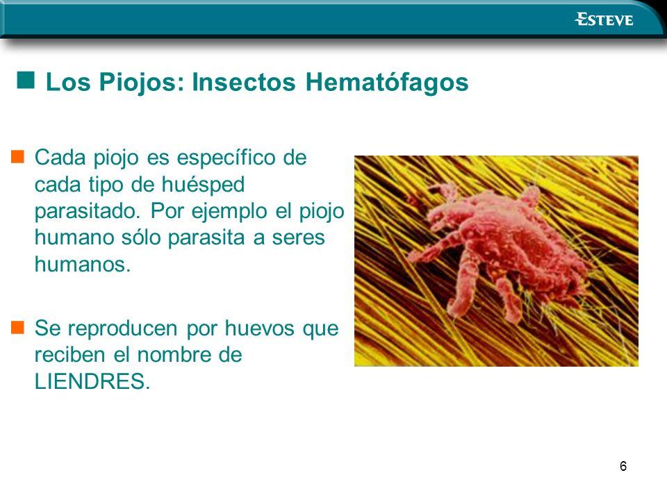 6 Los Piojos: Insectos Hematófagos Cada piojo es específico de cada tipo de huésped parasitado. Por ejemplo el piojo humano sólo parasita a seres huma