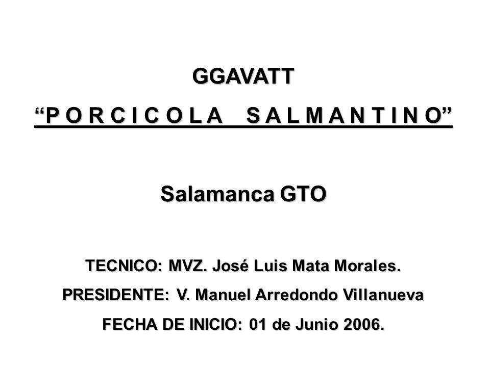 GGAVATT P O R C I C O L A S A L M A N T I N O Salamanca GTO TECNICO: MVZ. José Luis Mata Morales. PRESIDENTE: V. Manuel Arredondo Villanueva FECHA DE