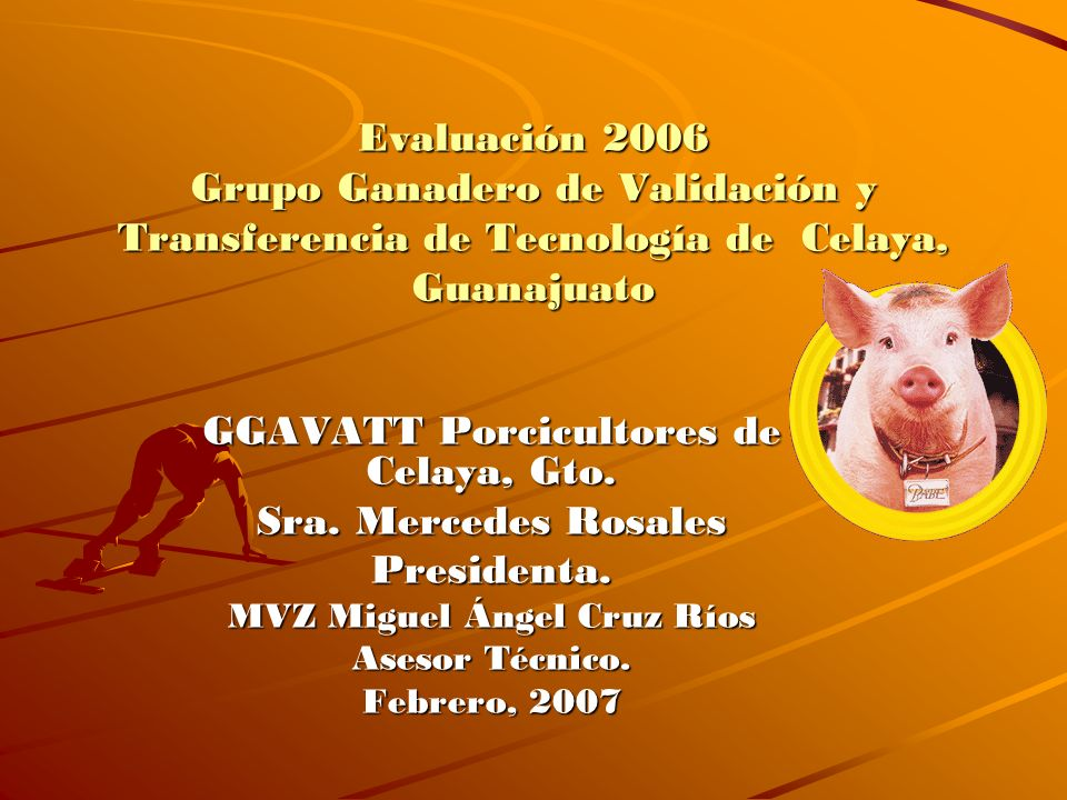 Evaluación 2006 Grupo Ganadero de Validación y Transferencia de Tecnología de Celaya, Guanajuato GGAVATT Porcicultores de Celaya, Gto. Sra. Mercedes R