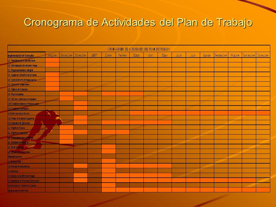 Cronograma de Actividades del Plan de Trabajo