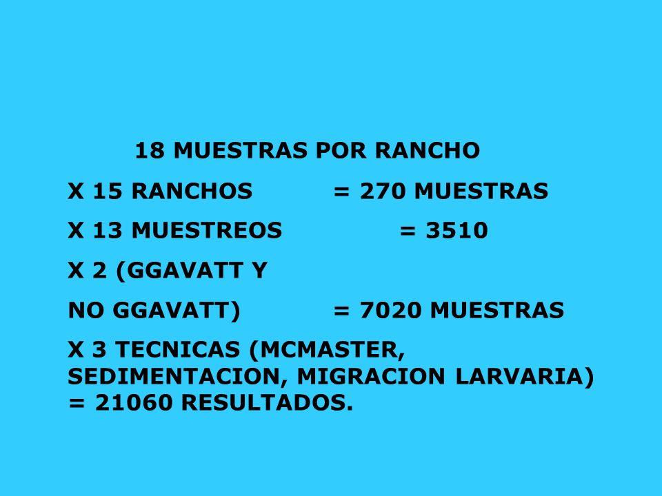 18 MUESTRAS POR RANCHO X 15 RANCHOS = 270 MUESTRAS X 13 MUESTREOS = 3510 X 2 (GGAVATT Y NO GGAVATT) = 7020 MUESTRAS X 3 TECNICAS (MCMASTER, SEDIMENTAC
