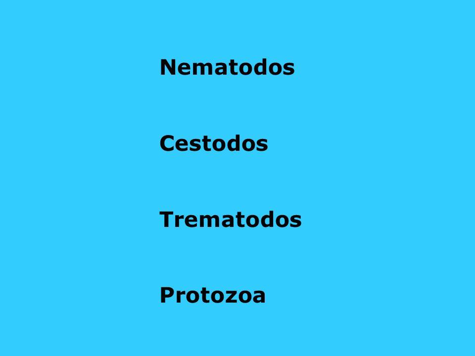 Nematodos Cestodos Trematodos Protozoa