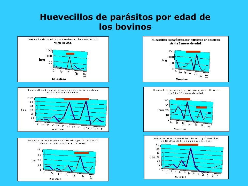 Huevecillos de parásitos por edad de los bovinos