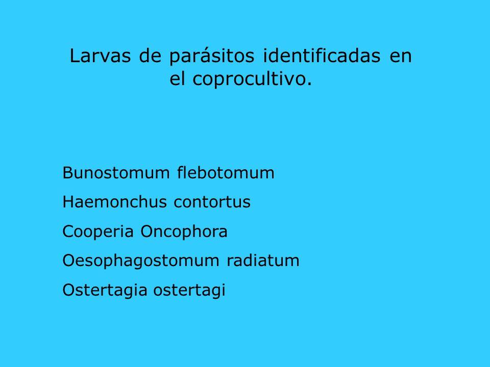 Larvas de parásitos identificadas en el coprocultivo. Bunostomum flebotomum Haemonchus contortus Cooperia Oncophora Oesophagostomum radiatum Ostertagi