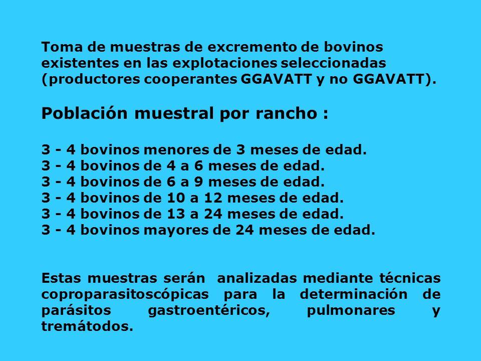 Toma de muestras de excremento de bovinos existentes en las explotaciones seleccionadas (productores cooperantes GGAVATT y no GGAVATT). Población mues