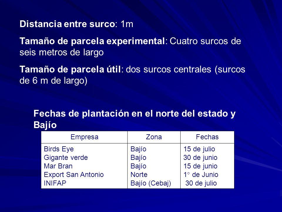 Distancia entre surco: 1m Tamaño de parcela experimental: Cuatro surcos de seis metros de largo Tamaño de parcela útil: dos surcos centrales (surcos d