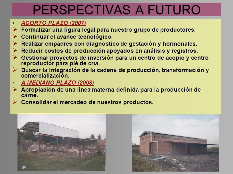 PERSPECTIVAS A FUTURO ACORTO PLAZO (2007) Formalizar una figura legal para nuestro grupo de productores. Continuar el avance tecnológico. Realizar emp