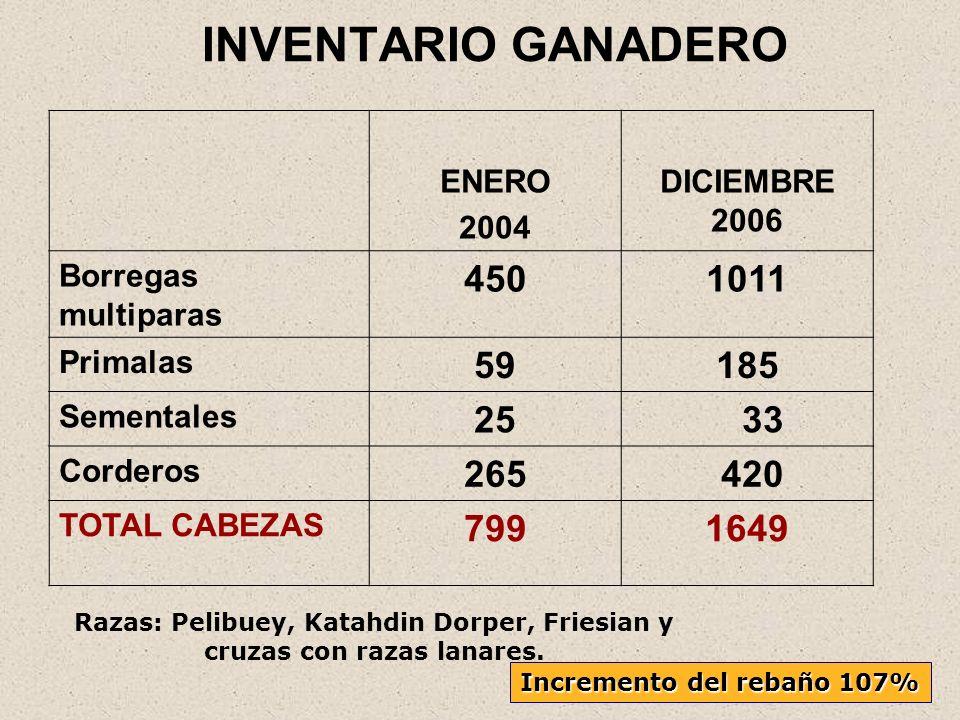 INVENTARIO GANADERO ENERO 2004 DICIEMBRE 2006 Borregas multiparas 4501011 Primalas 59185 Sementales 25 33 Corderos 265 420 TOTAL CABEZAS 7991649 Razas