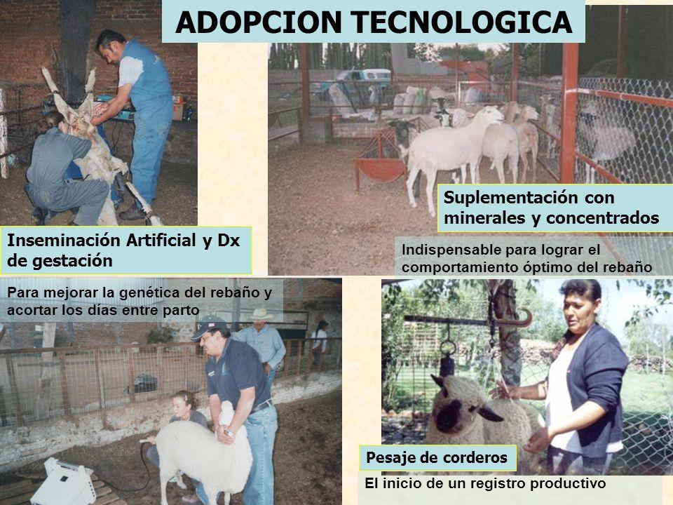 PERSPECTIVAS A FUTURO ACORTO PLAZO (2007) Formalizar una figura legal para nuestro grupo de productores.